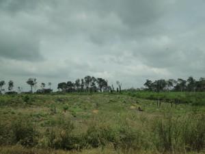 3 - Platgebrande stukken bos
