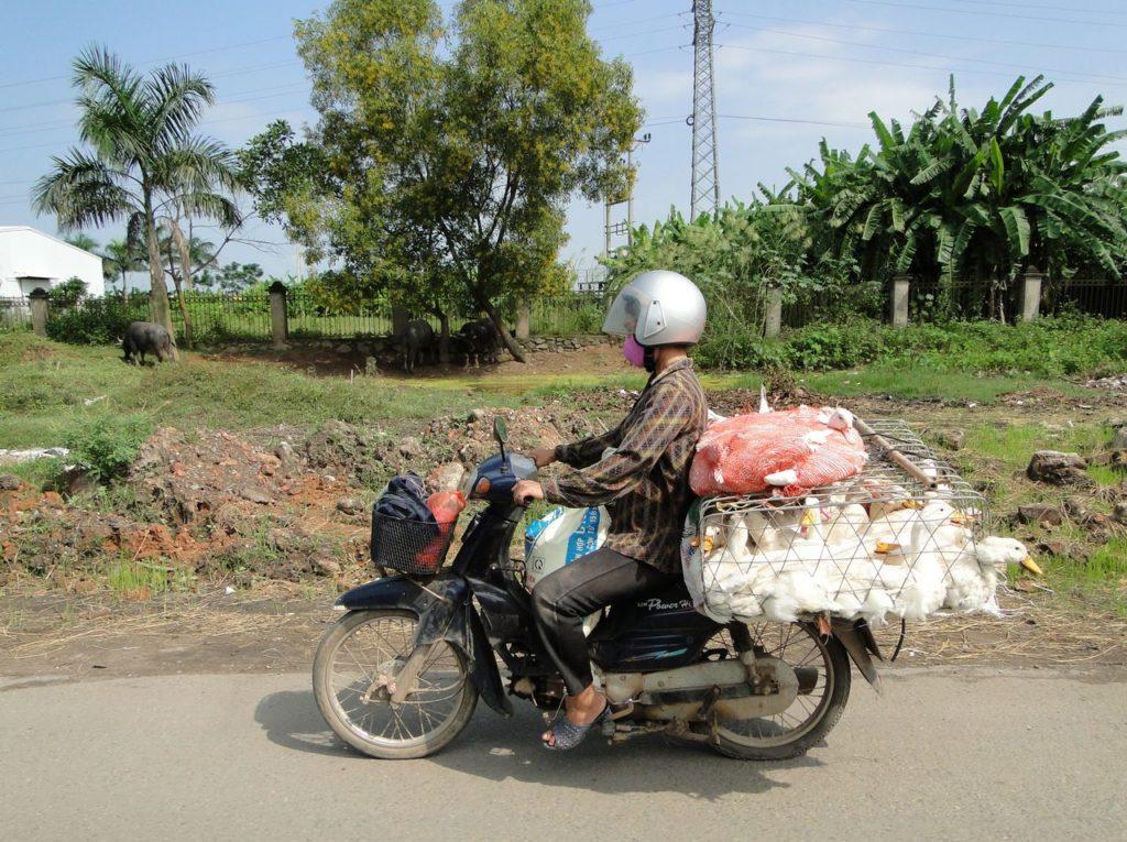 Vietnam (noordoosten) - Eenden brommertje