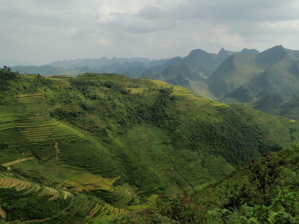 Vietnam (noordoosten) - Rijstterassen